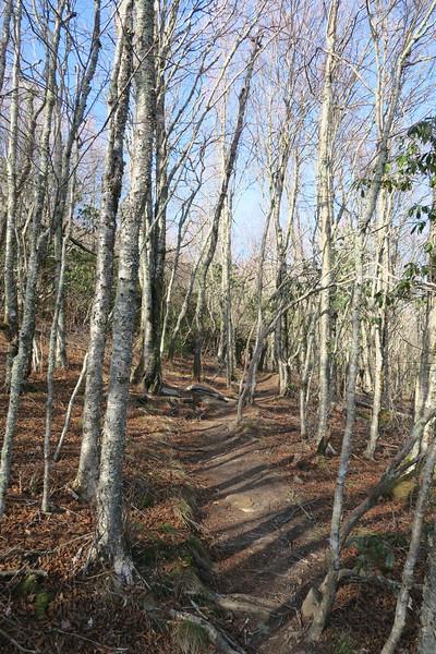 Sam Knob Summit Trail -- 5,750'