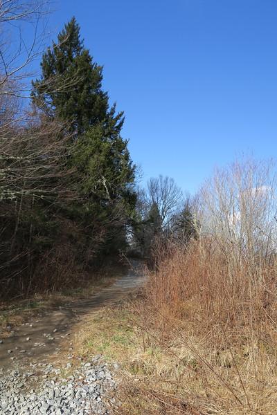 Sam Knob Trail (Ivestor Gap Trailhead) -- 5,800'