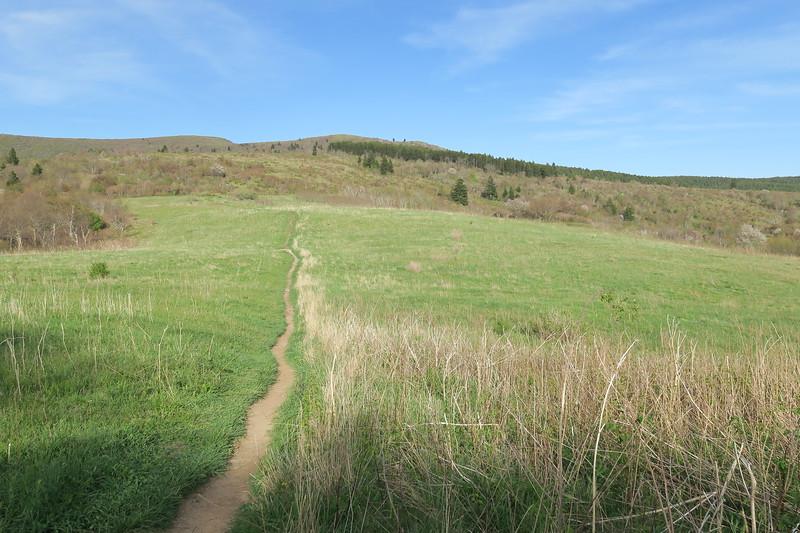 Sam Knob Trail -- 5,650'