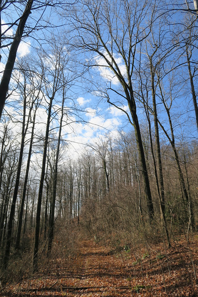 Seniard Ridge Trail -- 3,460'