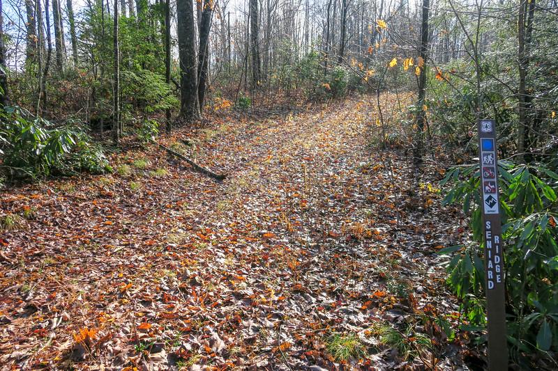 Seniard Ridge/Case Camp Ridge Trail Junction -- 3,440'