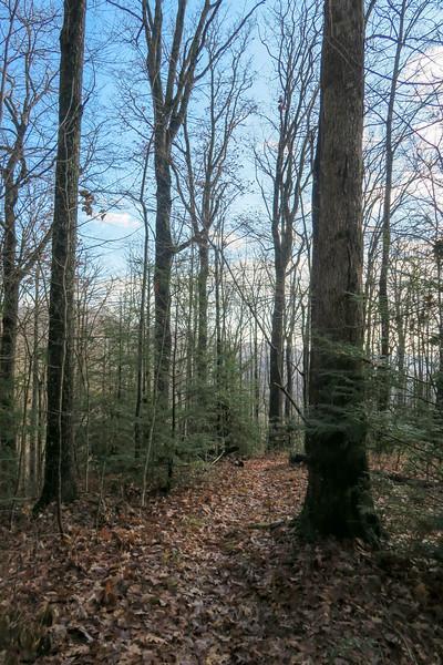Seniard Ridge Trail -- 3,360'