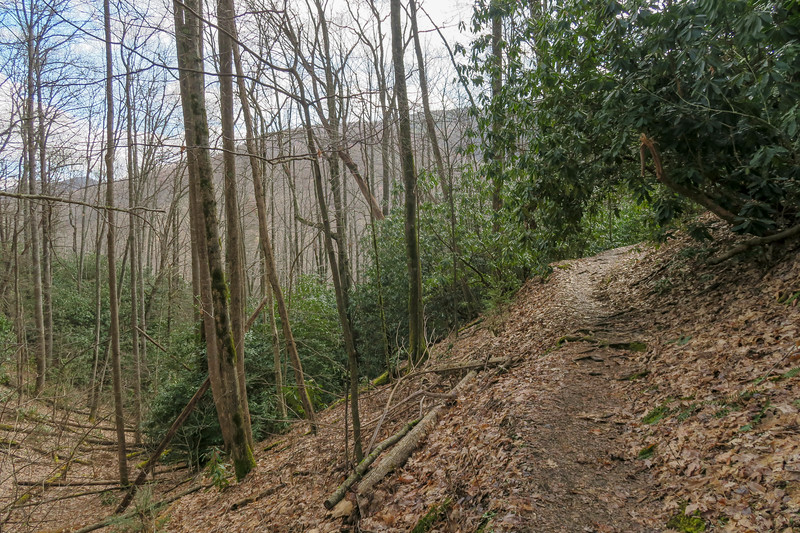 Shining Creek Trail -- 3,600'