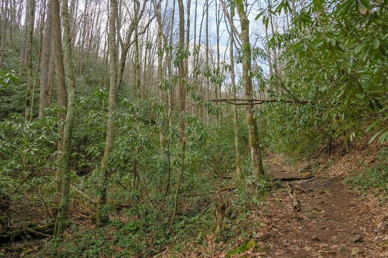 Shining Creek Trail -- 3,450'