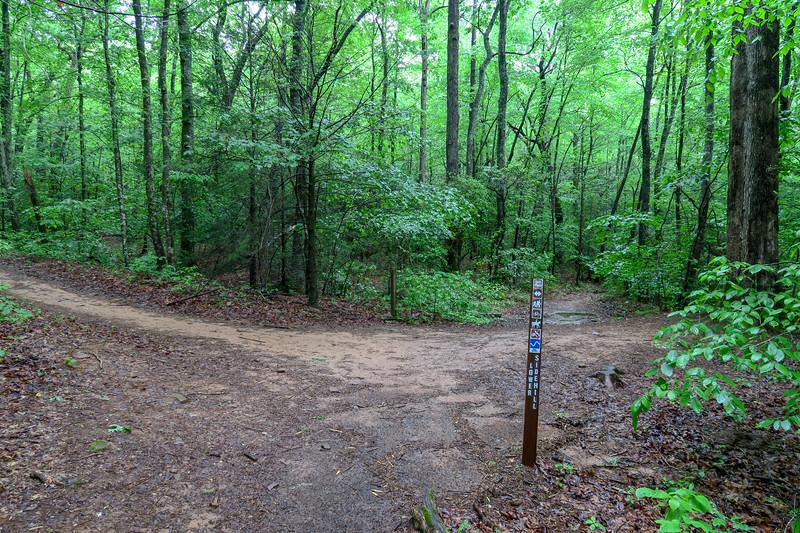 Sidehill Connector/Lower Sidehill Trail Junction