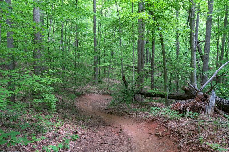 Sidehill Trail -- 2,700'