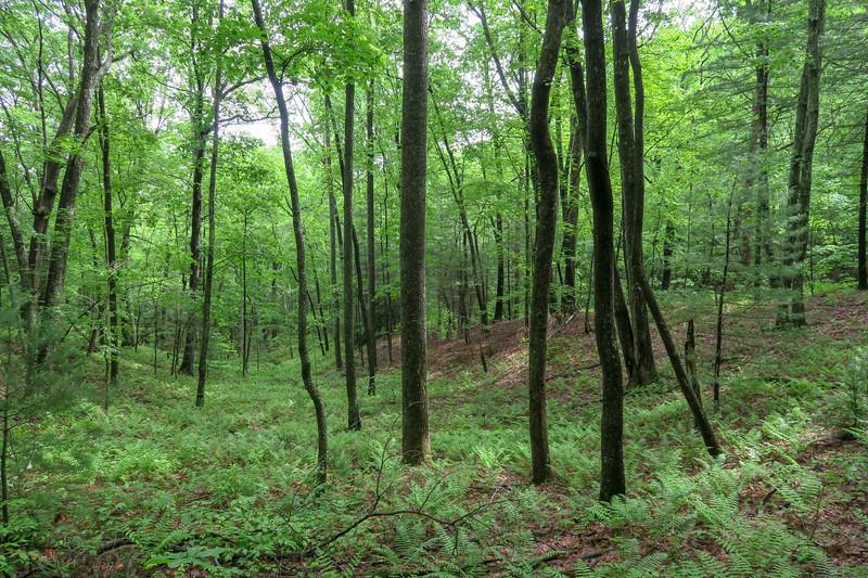 Sleepy Gap Trail -- 2,460'