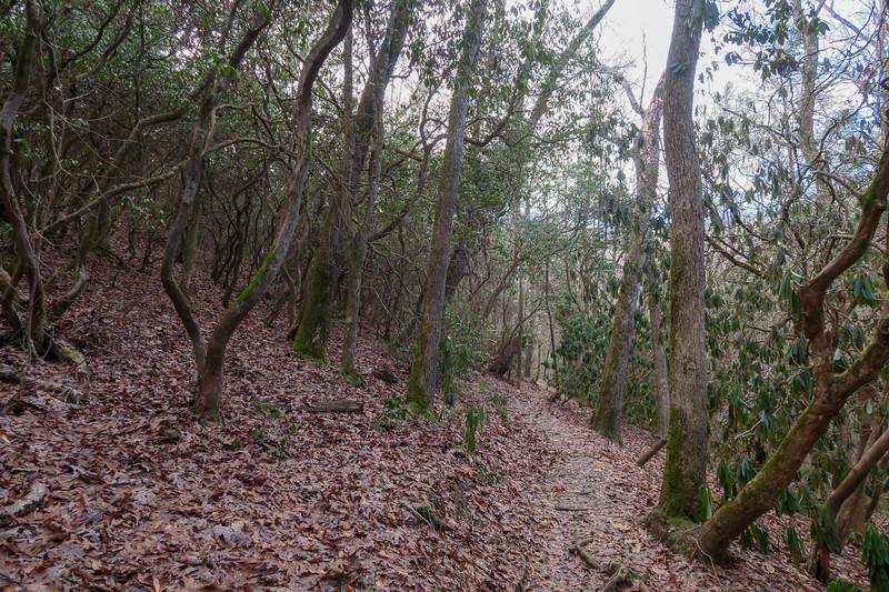 Small Creek Trail -- 2,180'