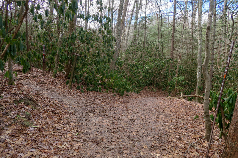 Small Creek/Homestead Trail Junction -- 2,160'