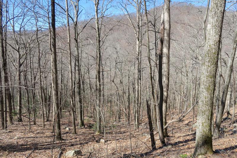 Spencer Branch Trail -- 3,040'