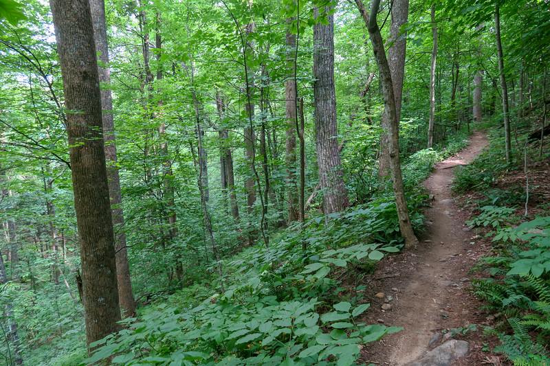 Spencer Gap Trail -- 3,320'