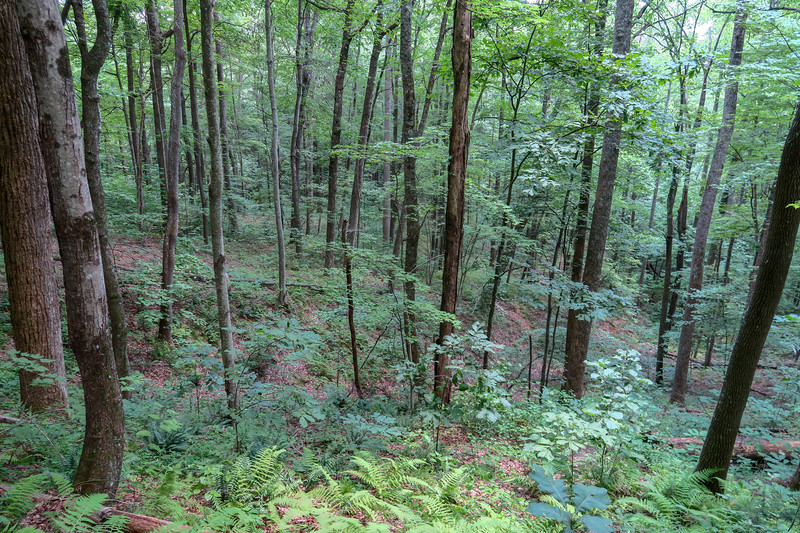 Spencer Gap Trail -- 2,960'
