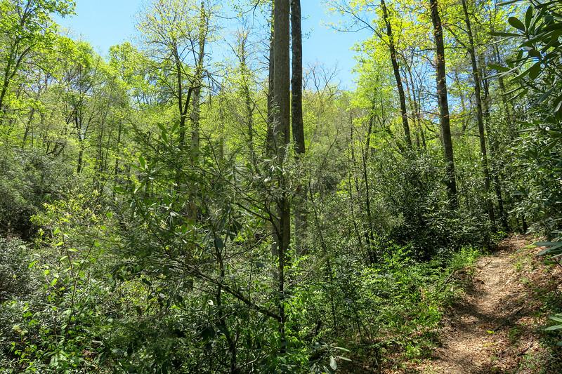 Squirrel Gap Trail -- 2,700'