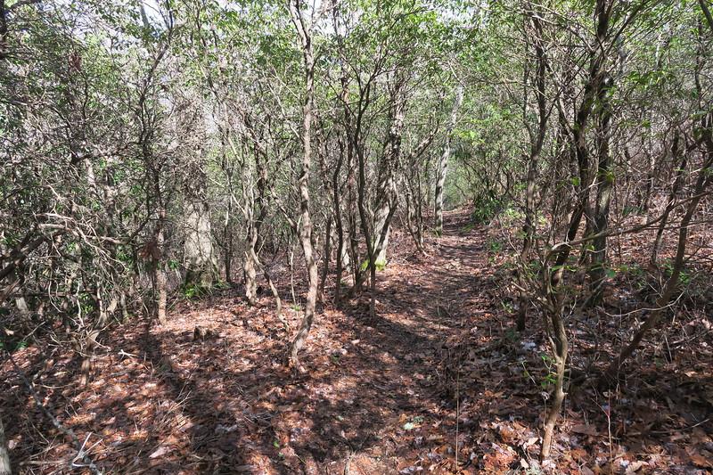 Summey Cove Trail - 3,785'