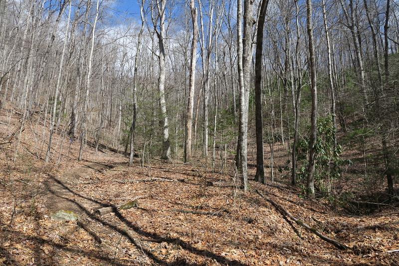Summey Cove Trail - 3,350'