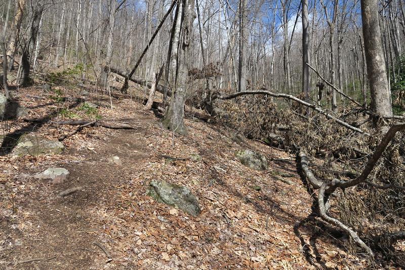 Summey Cove Trail - 3,450'