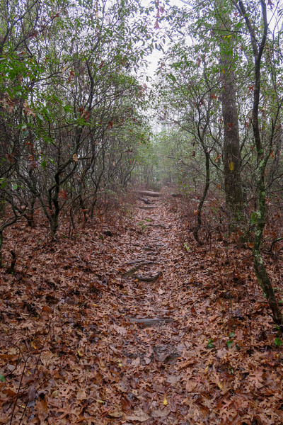 Sunwall Trail -- 3,180'