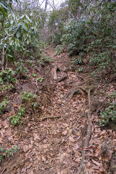 Thompson Creek Trail -- 4,550'