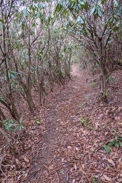 Thompson Creek Trail -- 4,800'
