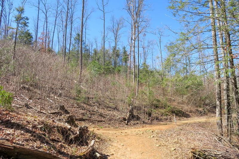 Trace Ridge/Wash Creek Trail Junction -- 2,420'