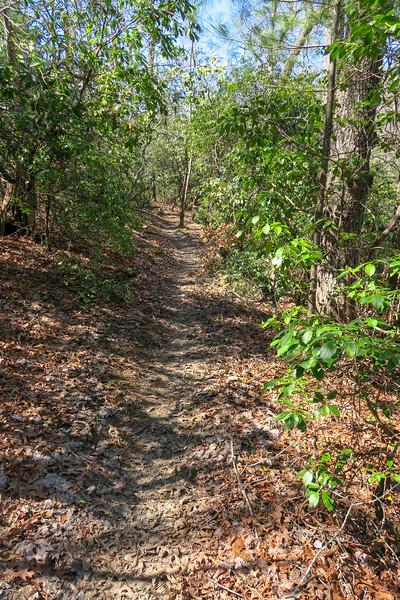 Trace Ridge Trail -- 2,360'