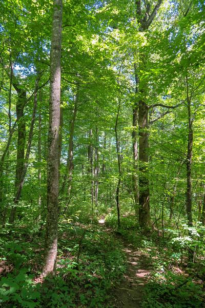 Turkeypen Gap Trail -- 3,900'