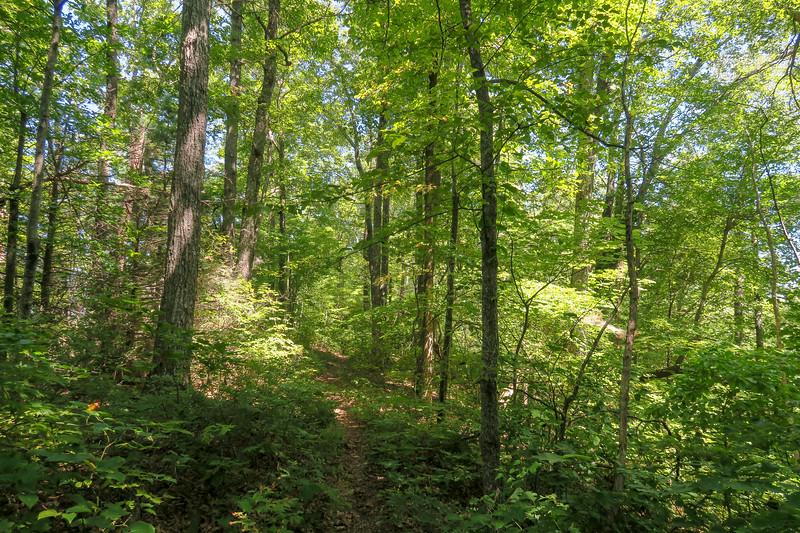 Turkeypen Gap Trail -- 3,450'