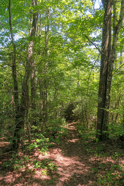Turkeypen Gap Trail -- 3,400'