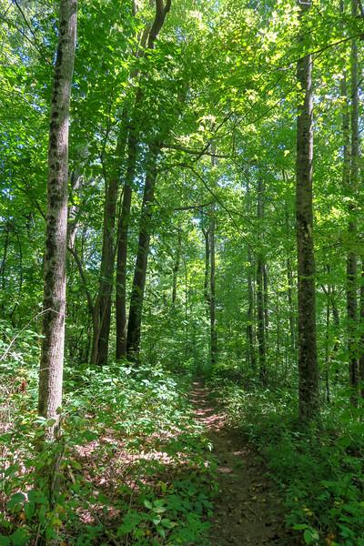 Turkeypen Gap Trail -- 3,800'