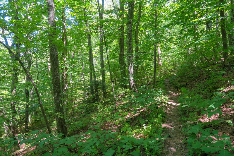 Turkeypen Gap Trail -- 3,700'