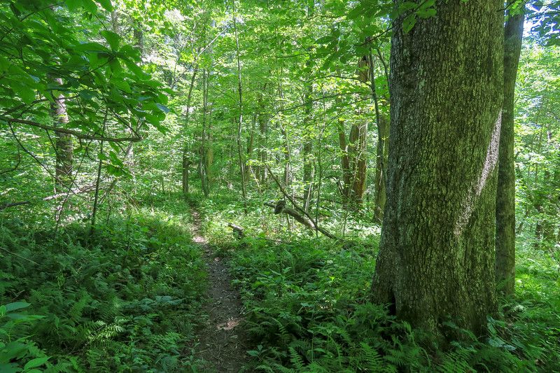 Turkeypen Gap Trail -- 4,000'