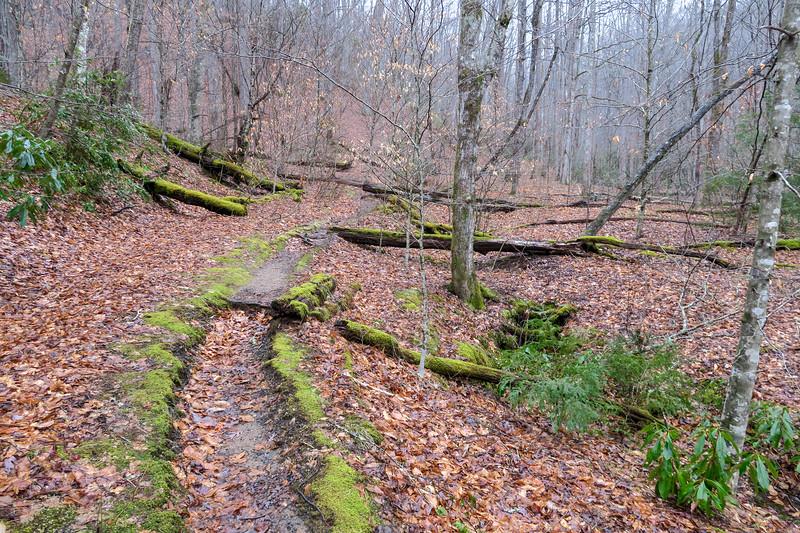 Twin Falls Trail -- 2,720'
