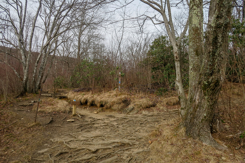 Upper Falls/Graveyard Fields Loop Trail Junction -- 5,050'