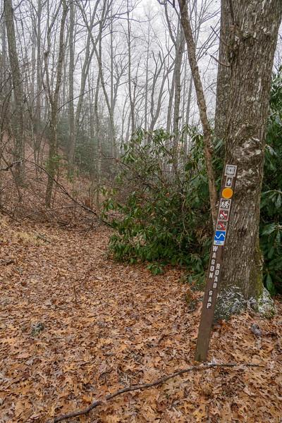 Wagon Road Gap/Turkeypen Gap Trail Junction (Wagon Road Gap) -- 3,000'