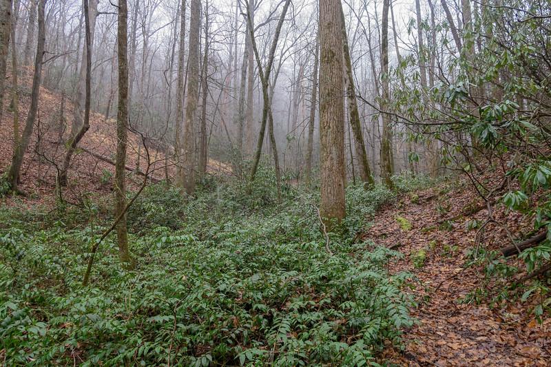 Wagon Road Gap Trail -- 2,650'