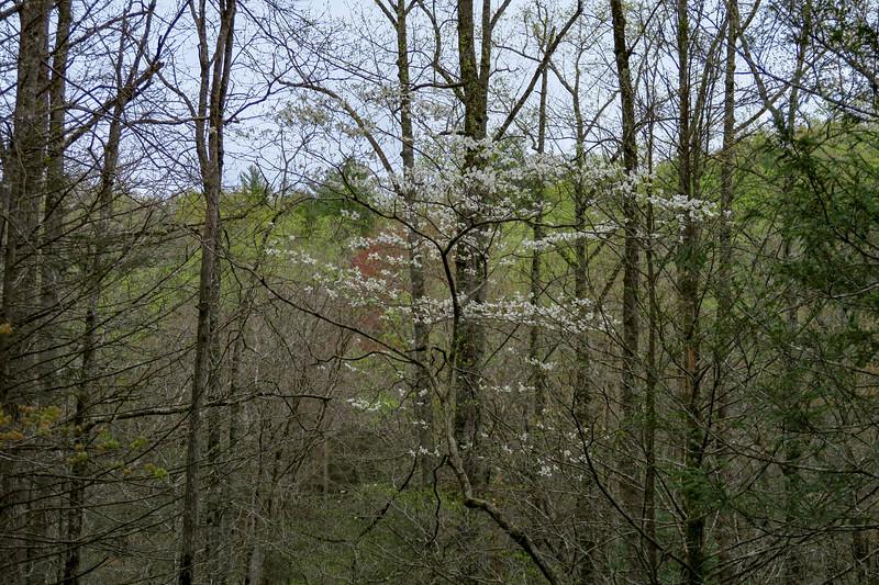 Wash Creek Trail -- 2,400'