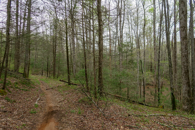 Wash Creek Trail -- 2,390'