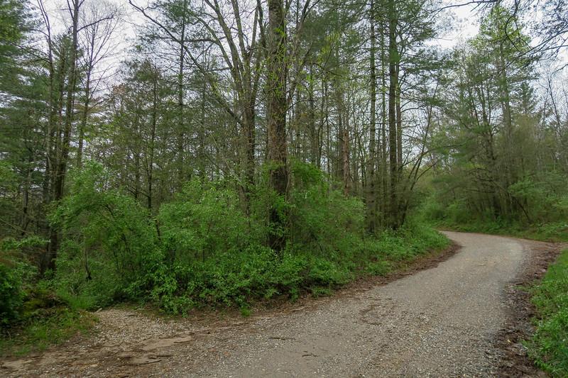 Wash Creek Trail @ F.R. 142 -- 2,430'