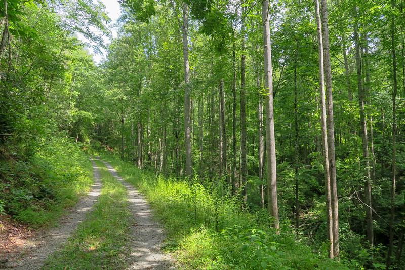 Yellow Gap Trail (F.R. 5050) -- 2,490'
