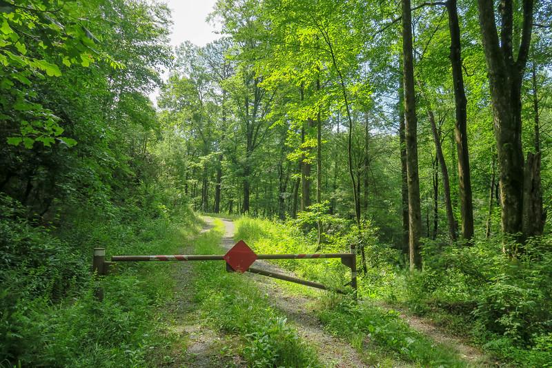 Yellow Gap Trail (F.R. 5050) -- 2,420'