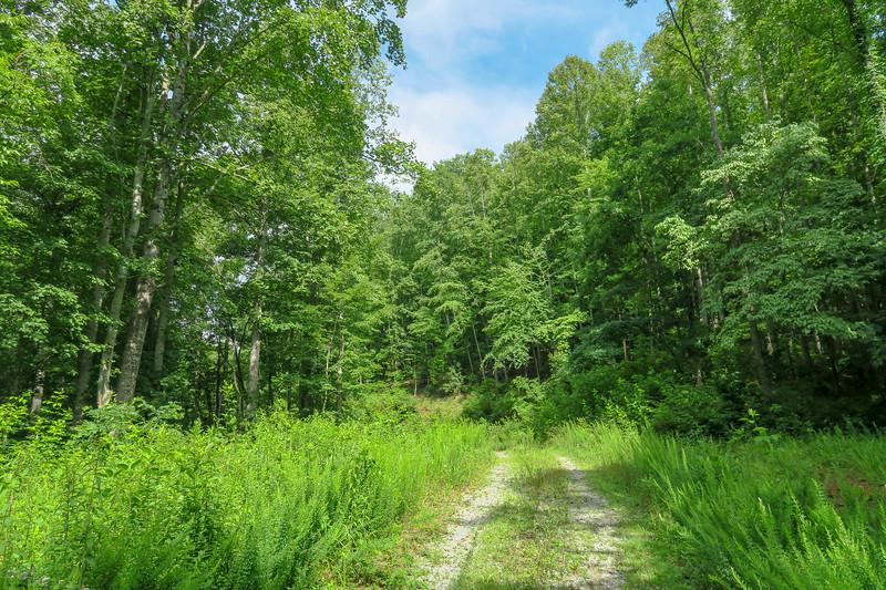 Yellow Gap Trail (F.R. 5050) -- 2,600'