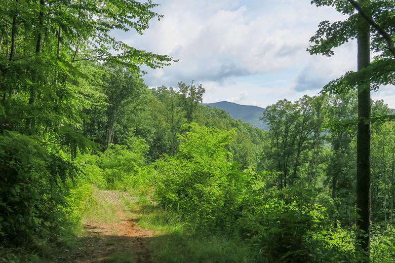 Yellow Gap Trail -- 2,700'