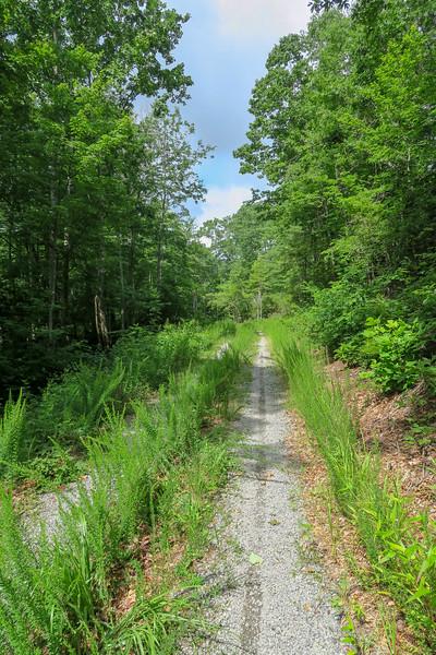 Yellow Gap Trail (F.R. 5050) -- 2,720'