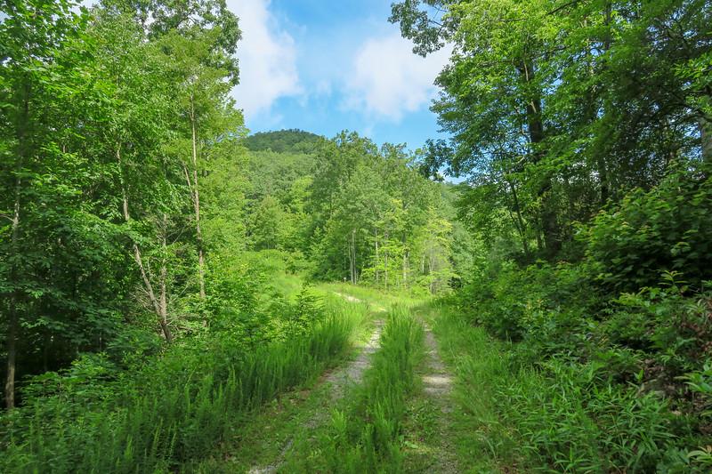 Yellow Gap Trail (F.R. 5050) -- 2,780'