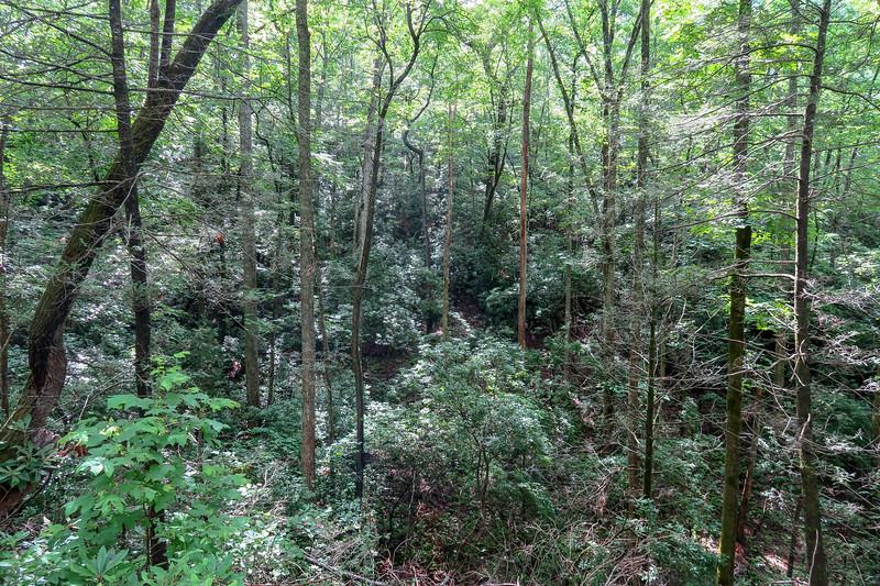Yellow Gap Trail (F.R. 5050) -- 2,450'