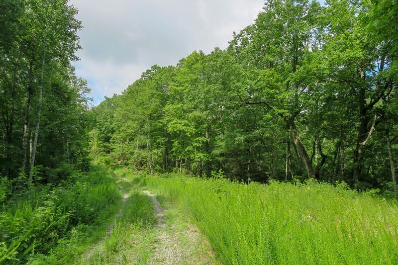 Yellow Gap Trail (F.R. 5050) -- 2,650'