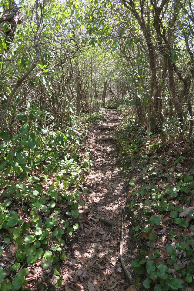 Rocky Mountain Trail -- 4,400'