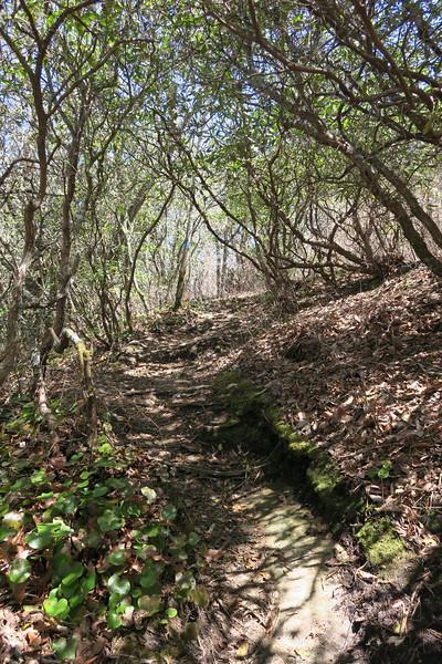Chimneytop Trail -- 4,000'