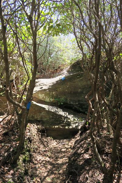 Chimneytop Trail -- 4,550'