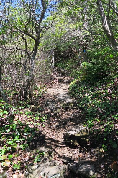Chimneytop Trail -- 4,350'